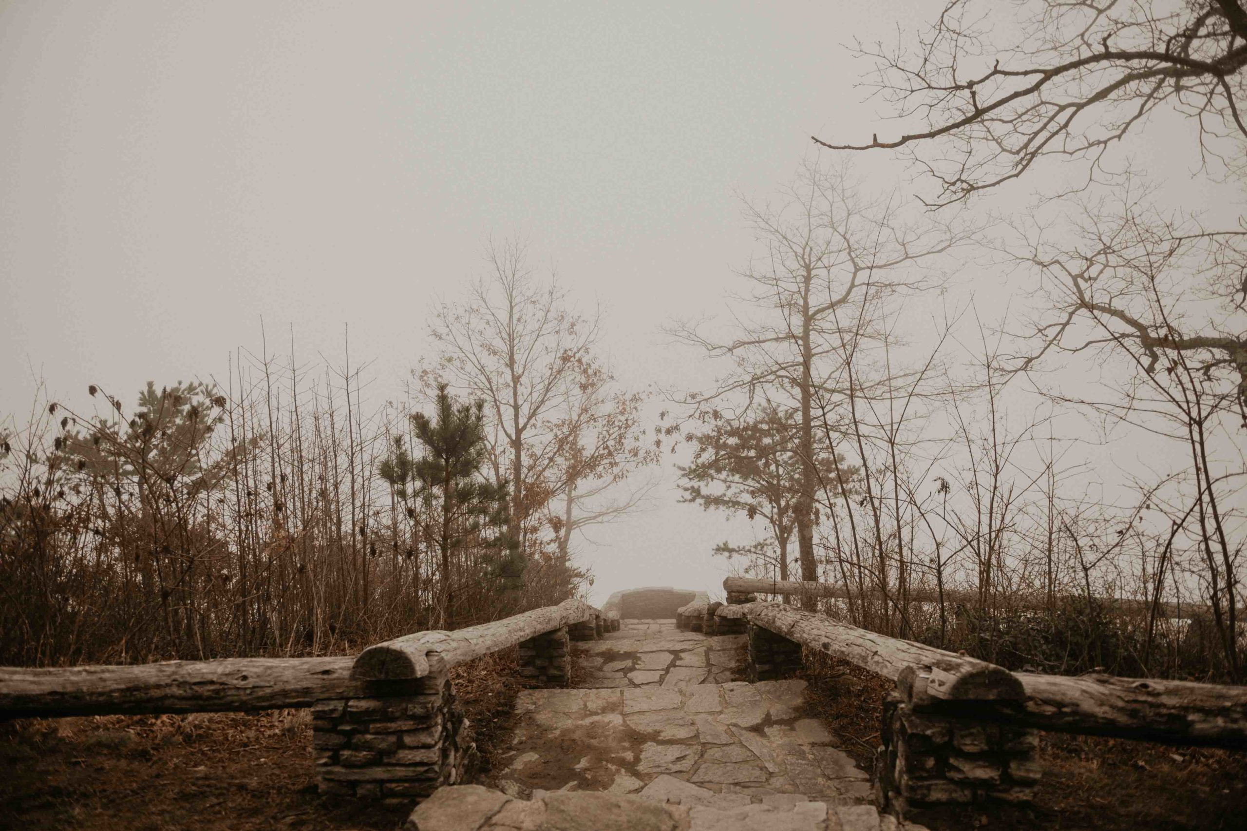 steps leading to a forest