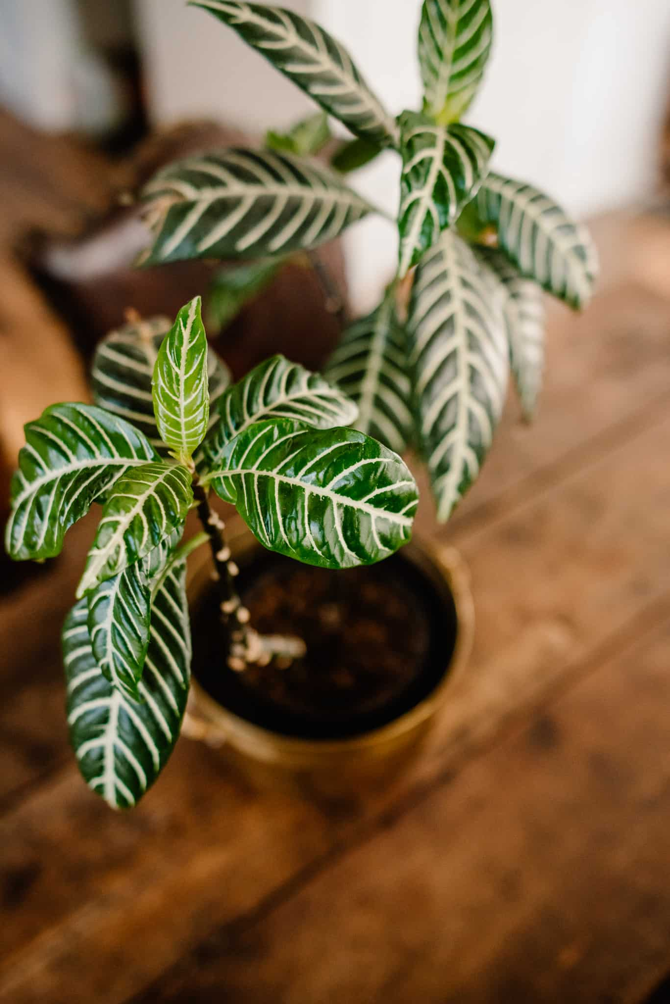 photo of a house plant on a wood table